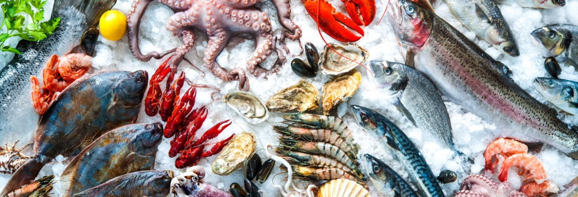 Softbank will inject capital for fisheries start-up, Aruna